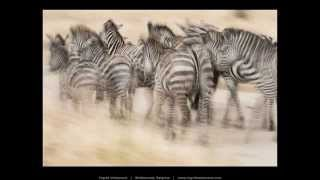 African Wildlife by Nature Photographers Network