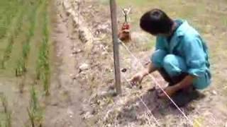 イノシシが田んぼに入ると、稲を踏み潰します。イノシシの侵入を防ぐた...