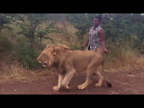 Travel Journal: Zimbabwe. Nubian Queen walking with her pet Lion