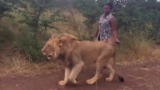 Nubian Queen walking with her pet Lion in Zimbabwe..