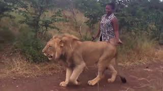 Nubian Queen walking with her pet Lion in Zimbabwe..