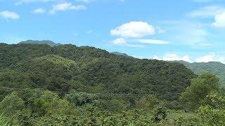Câu chuyện hội nhập : Cộng đồng quốc tế với nỗ lực phát triển rừng bền vững tại Việt Nam