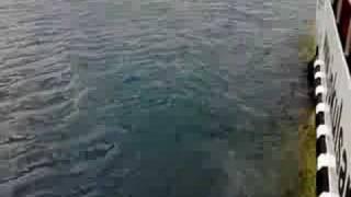 Amphibious boat in Iceberg Lake Iceland part 3
