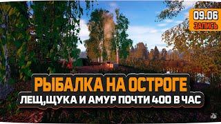 Озеро Старый Острог. Заработал на Леще Щуке и Амуре почти 400 серебра за час — Русская Рыбалка 4