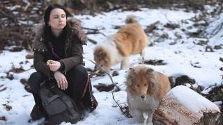 Trip with rough and smooth collies - Volovské vrchy, Slovakia