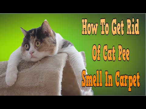 How To Get Rid Of Cat Pee Smell In Carpet How To Get Rid