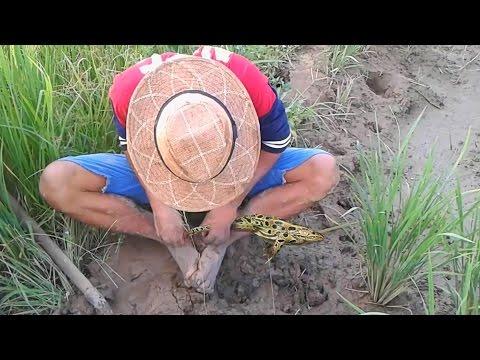 Digging frog - Amazing Digging - Asian Fishing - How To Digging Frog - EP 6