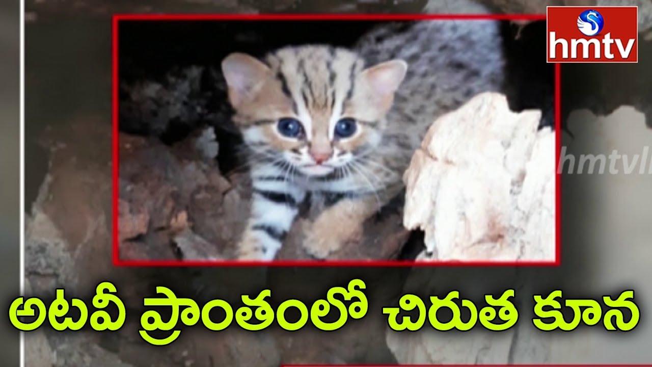 Leopard Kittens Found Inside Tree In Kamareddy