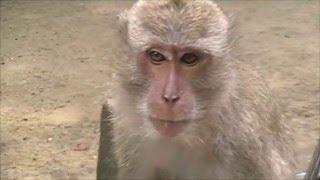 Тайланд пещера обезьян (фильм 5)