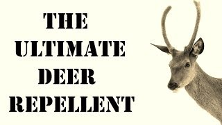 Natural Deer Repellent | BEST Repellent for Getting Rid of Deer Naturally | Animal Control