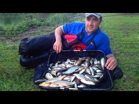Pole Fishing For Roach & Rudd - 50lb Silver Fish Challenge