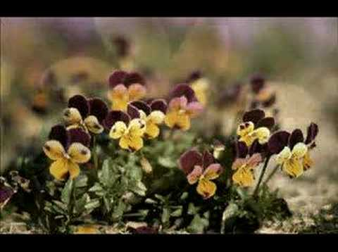 Randy Travis - Shout to the Lord - a flower slideshow
