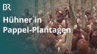 Schutz vor dem Habicht: Hühner in Pappel-Plantagen | Unser Land | BR Fernsehen