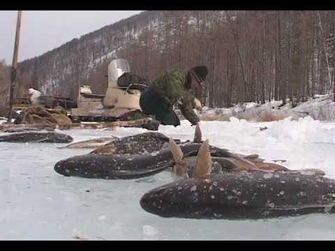 Winter Fishing In The Mountains Of Baikal Region.There Will Sure Be Fish, Mikhalich! Russia