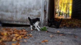 Прикольные котята - приколы с котами