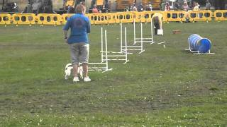 Pads Dog Training - Mod Stafford Flyball And Advanced Obedience Display