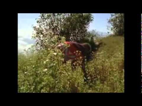 Descargar Video MARIA SABINA  la sabia de los hongos