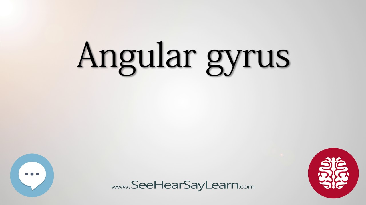 Angular gyrus Anatomy of the Brain SeeHearSayLearn 🔊 - YouTube
