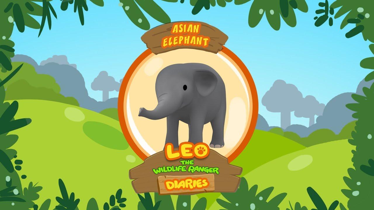 Leo The Wildlife Ranger Diaries - Asian Elephant