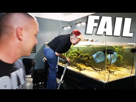 Catching Fish, Creating Dither Fish,  Arowana Aquarium AND Discus Update