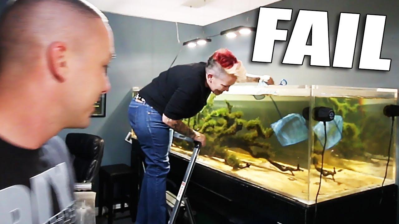 catching-fish-creating-dither-fish-arowana-aquarium-and-discus-update