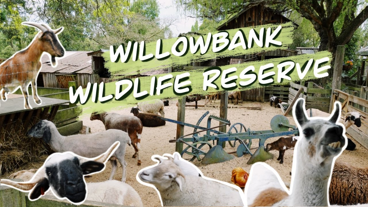 GOING TO THE ZOO! - Willowbank Wildlife Reserve