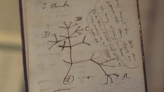 video: Charles Darwin notebooks 'stolen' from Cambridge library