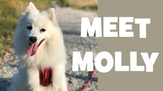 A DOG with a VLOG  Meet Molly the Japanese Spitz