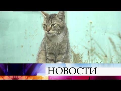 В Воронежской области люди и животные страдают от небывалого нашествия комаров. - Смотреть видео без ограничений
