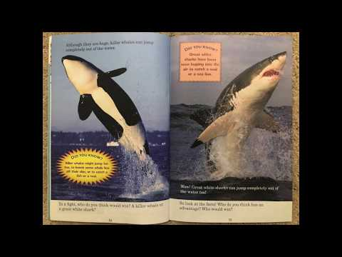 Reading for Arbor Bay School || Who Would Win? Killer Whale VS Great White Shark