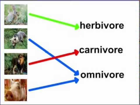 Whats the difference between omnivores, carnivores, and herbivores?