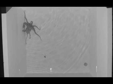 Octopus 4 Spatial MOTE