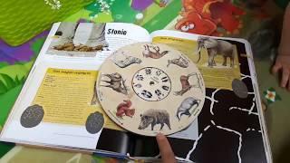 Uczymy się rozpoznawać tropy zwierząt