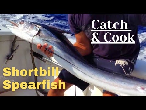 Catch And Cook: Rare Pacific Shortbill Spearfish & Marlin With The Legendary Captain Kenny Llanes