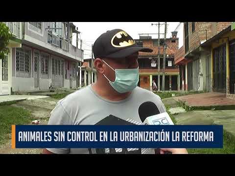 En la urbanización La Reforma el pasto creció dentro de las destruidas calles del barrio