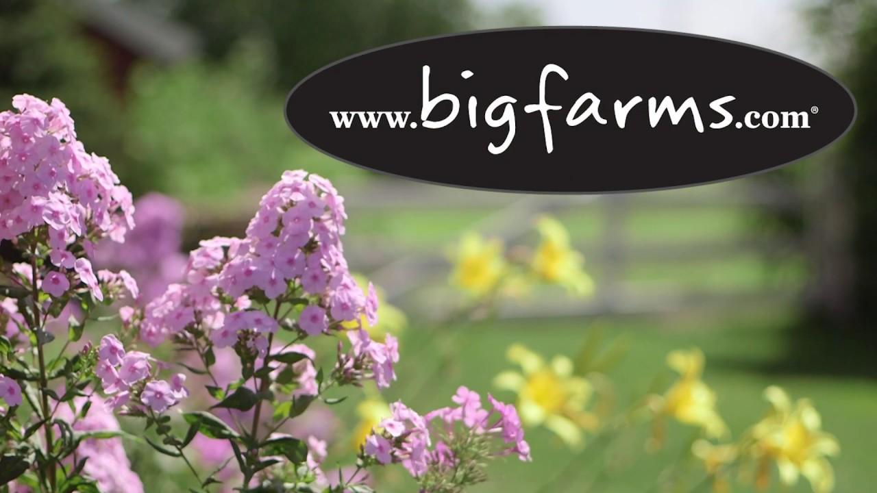 Bigfarm Com