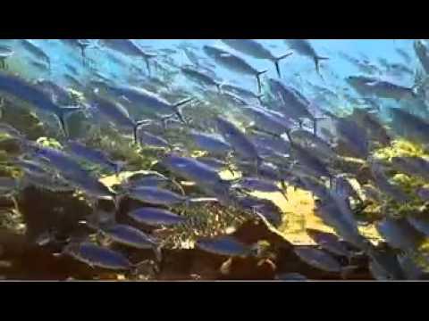 Raja ampat (taman eden bawah laut) surga di papua