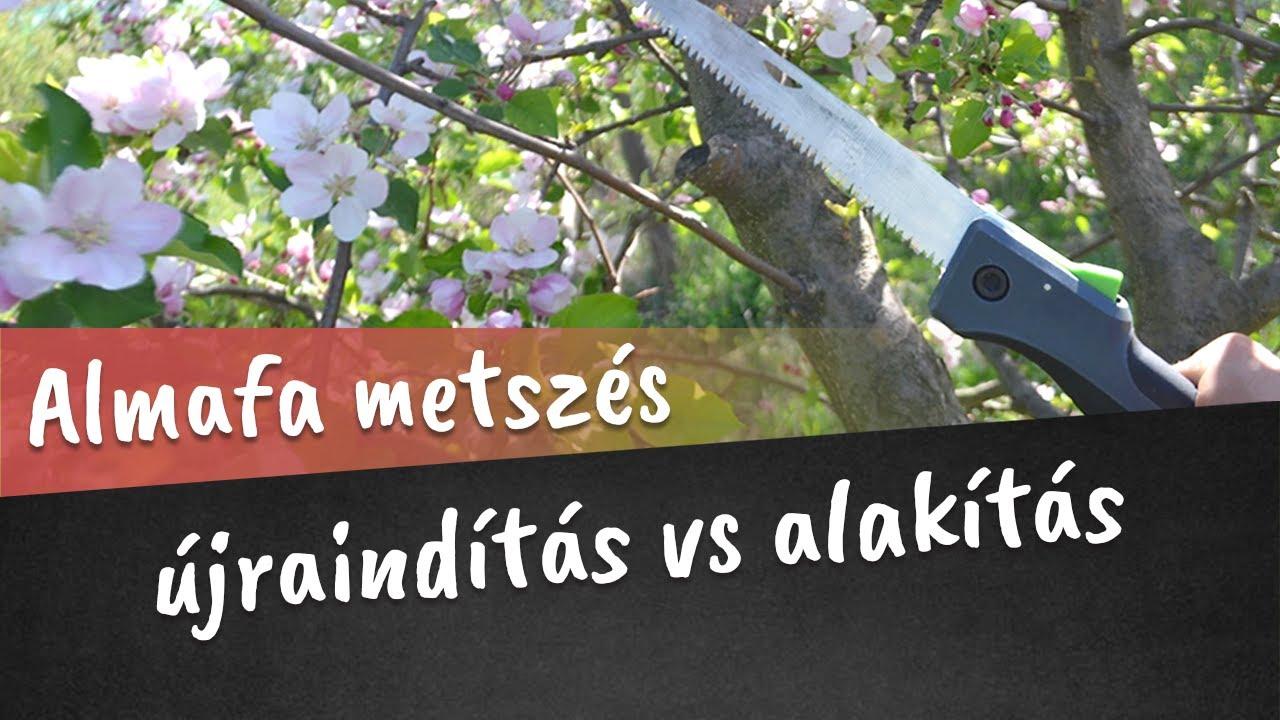 az almafák védelme a parazitákkal szemben férgek a napraforgómagból