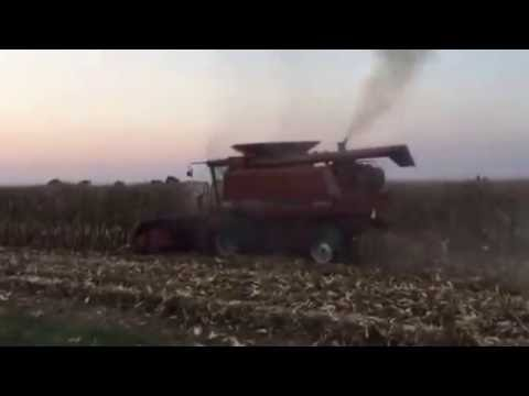 Harvesting corn with Case IH 2188!