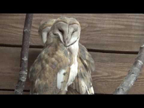 06 - Макки-Пакки - Контактный зоопарк Одесса - Contact Zoo Odesa