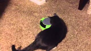 Boo's New Cat Toy Thumbnail
