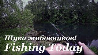 Ловля щуки на жабовниках - Fishing Today