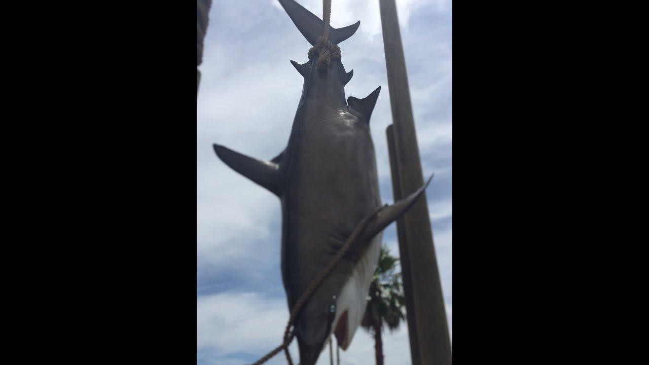 Shark Fishing Cocoa Beach Florida Fl Surf S Usa