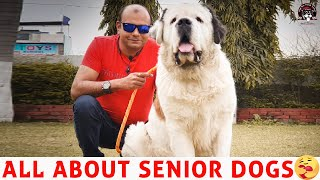CARE FOR SENIOR & OLD DOGS || FOR All DOG'S & PUPPY BREEDS ||BAADAL BHANDAARI