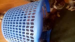 Kittens playing ball