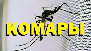 как комары находят человека
