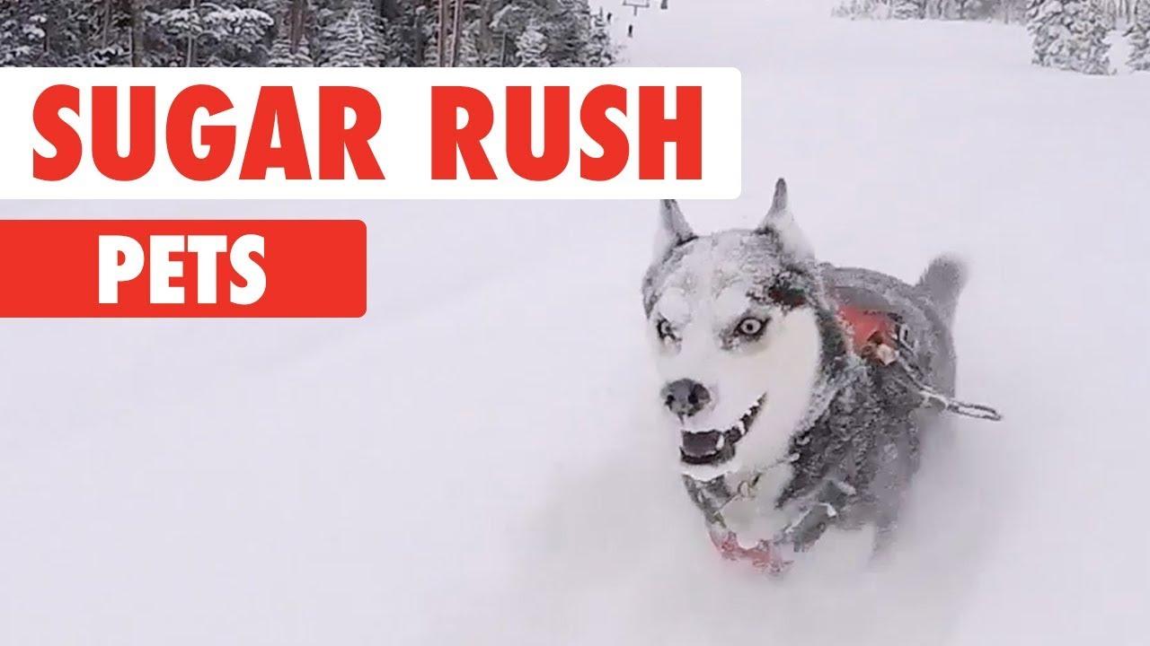 Sugar Rush Pets