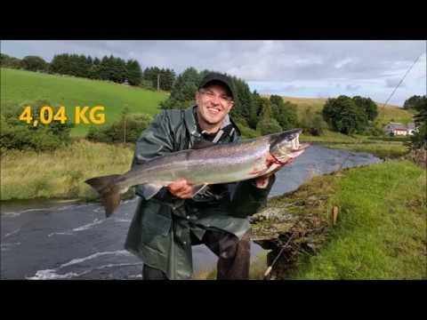 Angeln In Norwegen - Ein Tag Am (Klein-) Lachsfluss