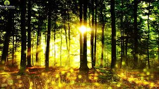 Mystical Forest Relaxing Music l Angelic Sleep Healing l Relaxation Music for Stress Relief