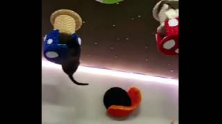 Funny jump cats with my room - video